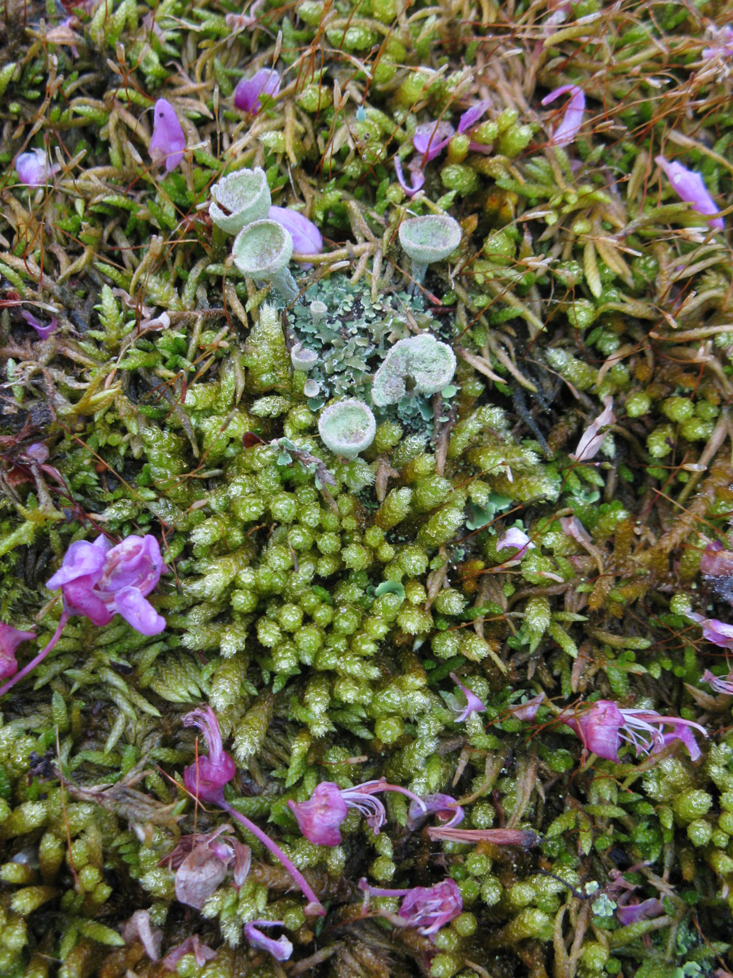 Moss Lichen Love Botanical Gardens At Asheville